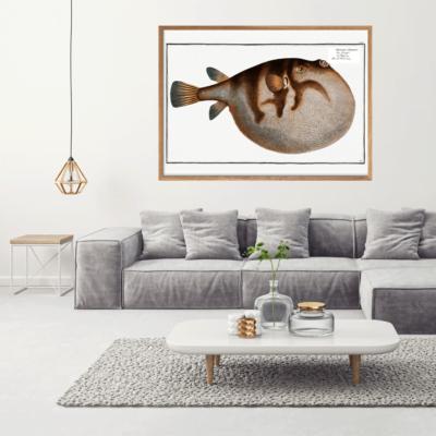 Kuglefisk