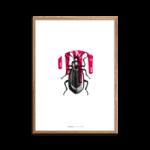 BeautyInCreeps_Beetle_Portraet_400x