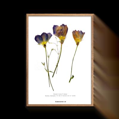 Stedmoder blomster