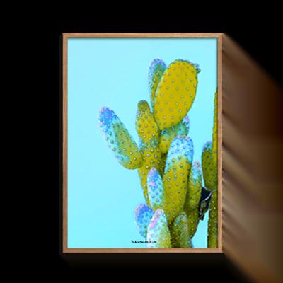 Love Blå Kaktus