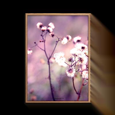 Natur Blomstermark