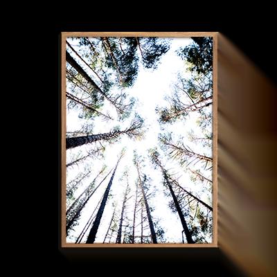 Natur Grantræer