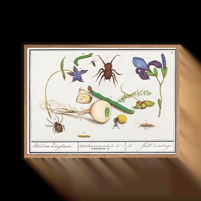 Insekter og dyr