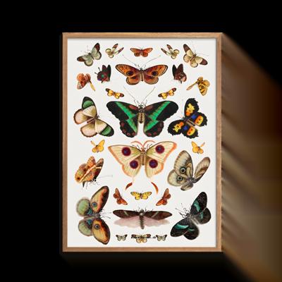 Sommerfugl Plakat